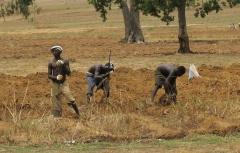 Nigerian_farmers