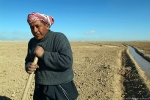 Digging_irrigation_channels,_Palmyra,_Syria