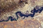 Syr_Darya_River_Floodplain,_Kazakhstan,_Central_Asia