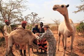 Ethiopia_VETCAP,_August_2011_(6152921022)